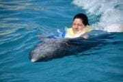 Jeep Riders Dolphin Cozumel Tours