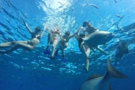 snorkel tour cozumel by jeep riders cozumel